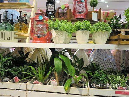 coucou観葉植物