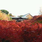 東福寺通天橋からの紅葉