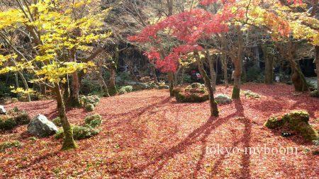 圓光寺の紅葉の絨毯