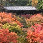 東福寺の紅葉ズーム