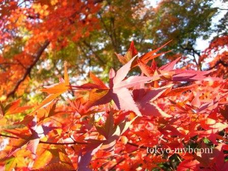東福寺の庭の紅葉