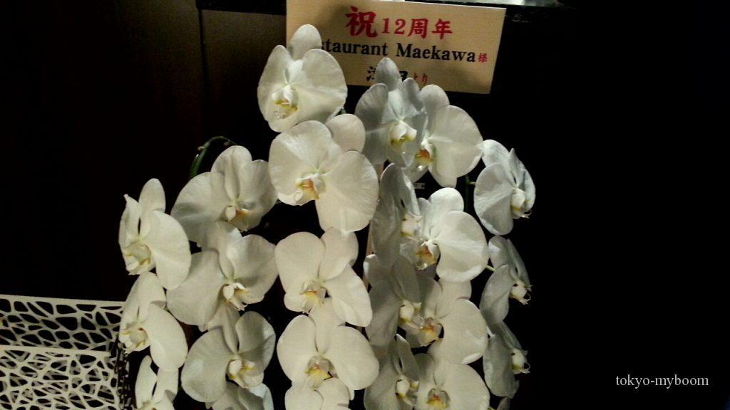 マエカワ12周年胡蝶蘭