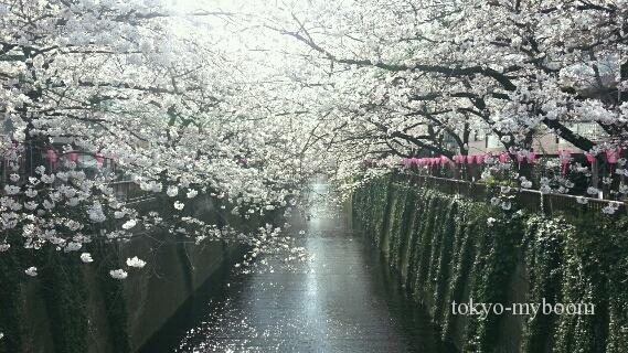東京の桜名所