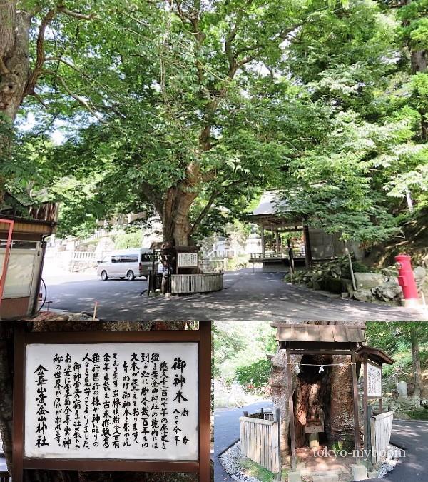 金華山黄金山神社アクセス