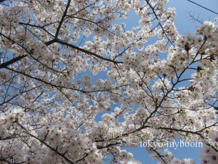 京都桜哲学の道アクセス