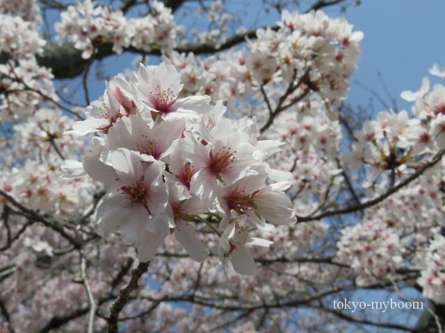 哲学の道アクセス電車バス桜