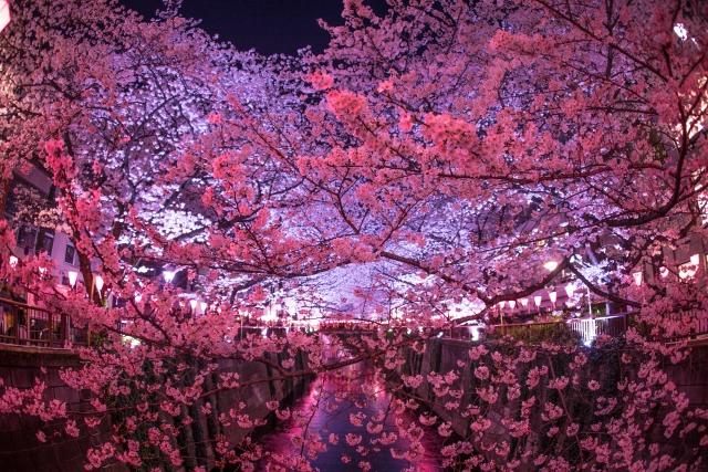 目黒川ライトアップ