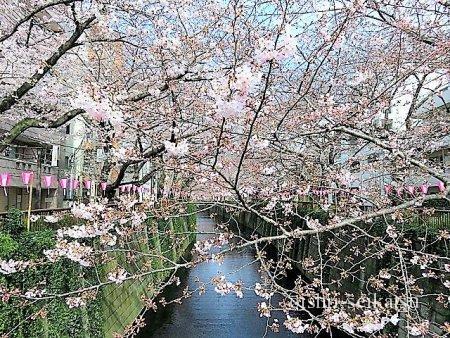 目黒川桜レストラン