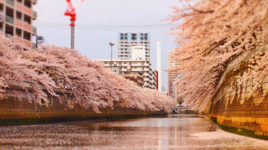 目黒川桜クルーズ