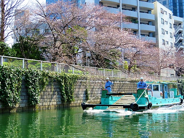 目黒川クルーズ桜予約