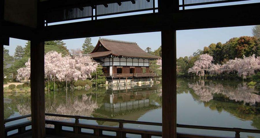 平安神宮桜開花状況枝垂れ桜見ごろ