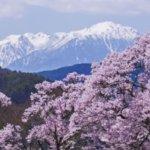 桜開花予想高遠城址公園