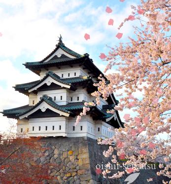 弘前桜開花状況