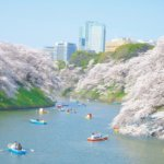 千鳥ヶ淵桜開花状況