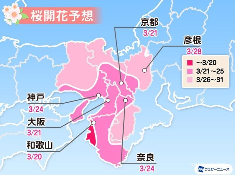 京都桜2020開花状況