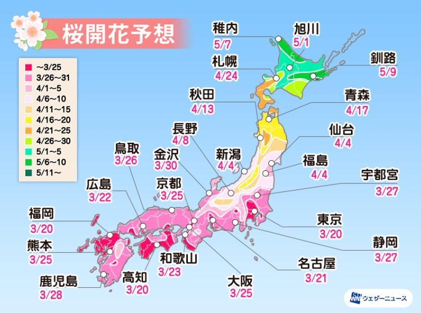 京都桜開花予想